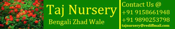 Taj Nursery