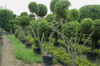 Plant Supplier