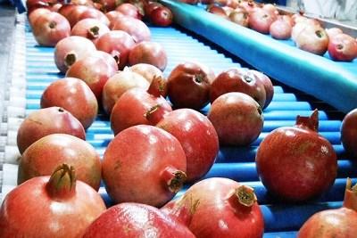 Pomegranate Process Plant Machine
