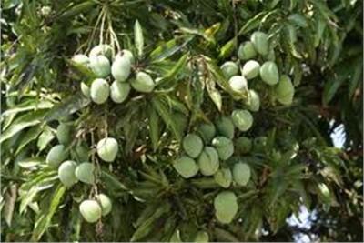 Fruits  Plants