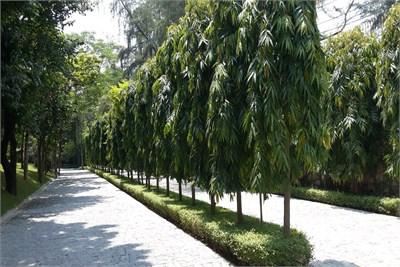 Garden and Landscape Development