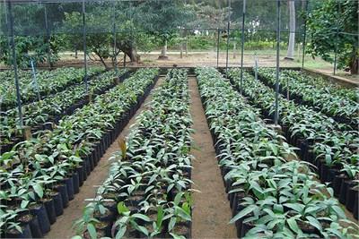Nursery in Gondia
