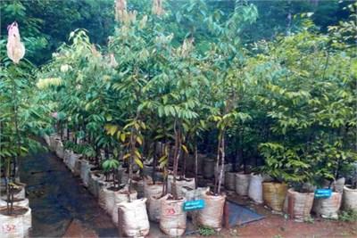Fruits Plant