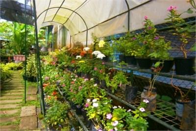 Show Plant