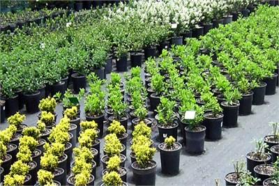 Best Nursery in Nagpur