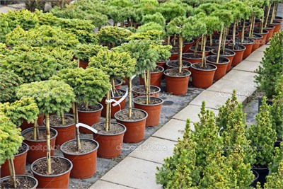 Plants on Rental or Hire