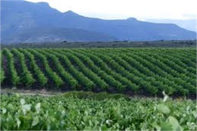 AGRICULTURAL LAND FOR SELL AT NAGPUR