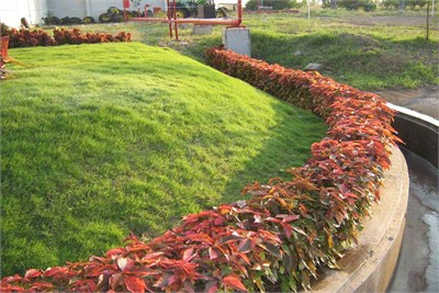 Supplier of Various types of Lawns