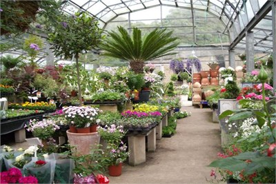 Plant Suppliers