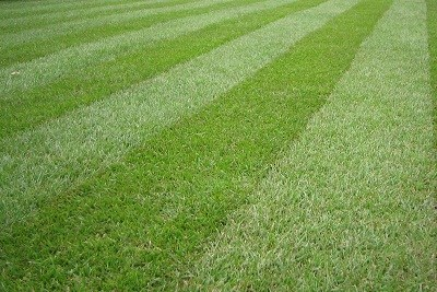 Galich Lawn