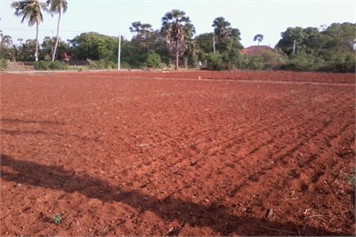 Red Soil Suppliers