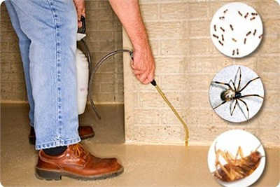 Bed Bugs Management Control