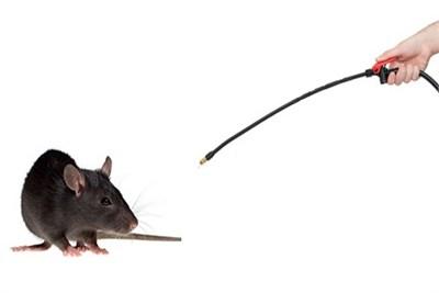 Rodent Management
