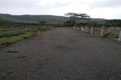11 Acer Plots in Somatane Phata