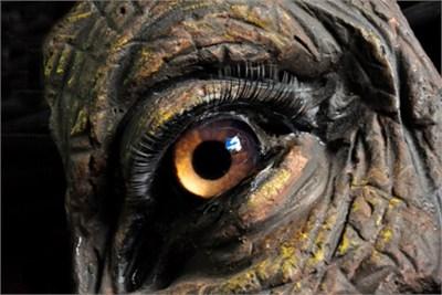 Animals lenses