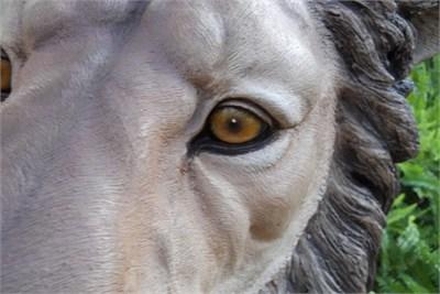 Animal Lenses 4