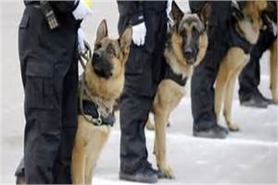Dog Security Services