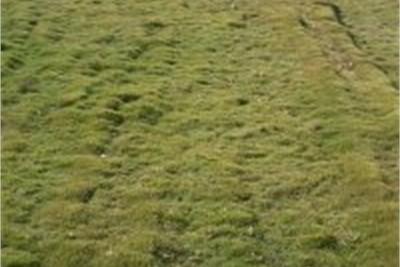 American Blue Lawn